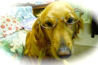 メガネの犬.jpg