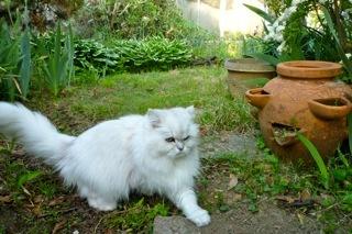 五月の庭でナナは.jpg