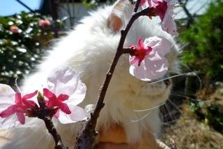 春の庭ナナ1.jpg