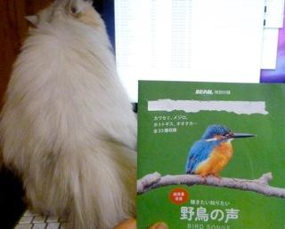 野鳥の声ナナ.jpg